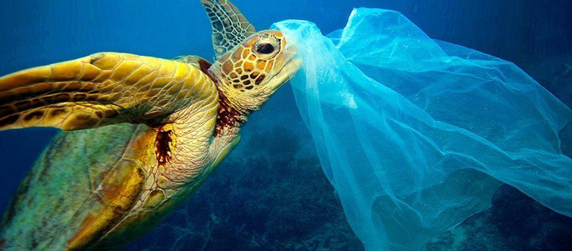 tartaruga plastiche